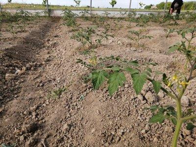Lago di Pane agricoltura sociale biologica parma