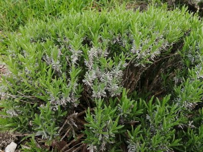 Lago di Pane agricoltura sociale biologica erbe aromatiche